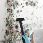 Black-Mold-Remediation-Lynnwood