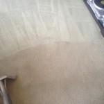 Carpet-Cleaning-Lynnwood