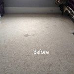 Cranberry Juice Stain Removal Lynnwood A