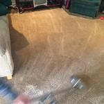 Dirty-Carpet-Cleaned-Lynnwood