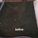Lynnwood-1-before-carpet
