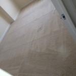 Lynnwood-Carpet-Clean-room