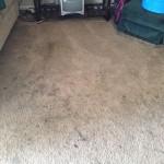 Lynnwood-Dirty-Carpet