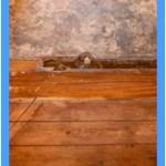 Wall-Mold-Removal-Lynnwood